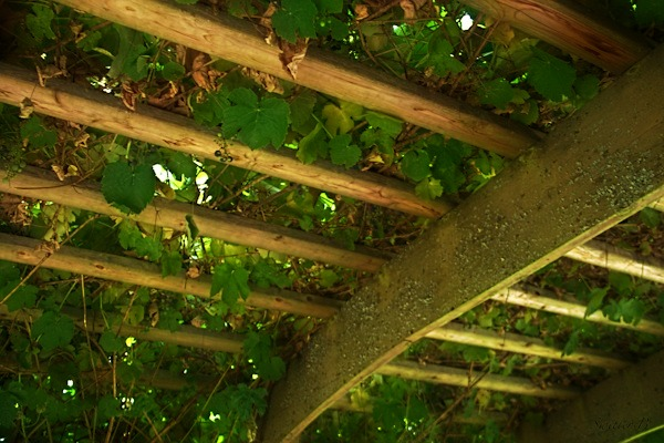 a grape arbor-garden-grapes-photography-SwittersB