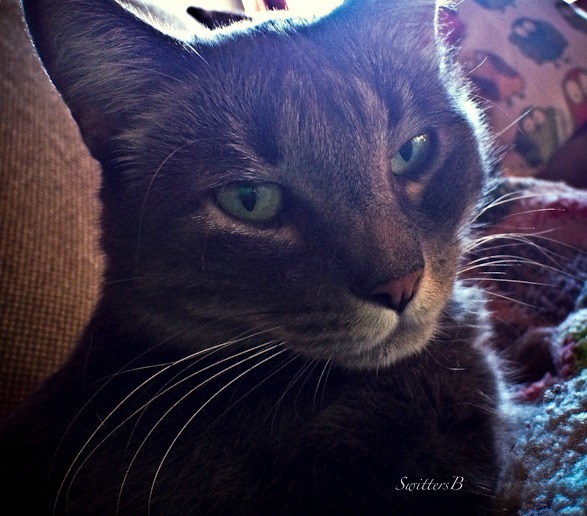 Cat--Penny the Cat-pets-Tabby-photography-SwittersB