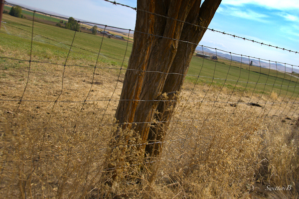 fence cemetery-Oregon-Lone Pine-Wamic-photography-SwittersB