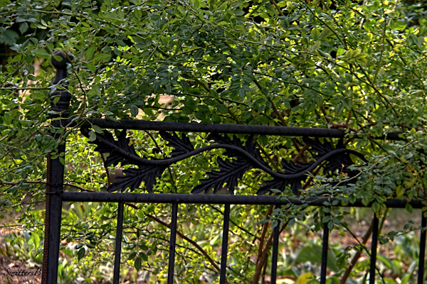 garden gate-gate-photography-SwittersB