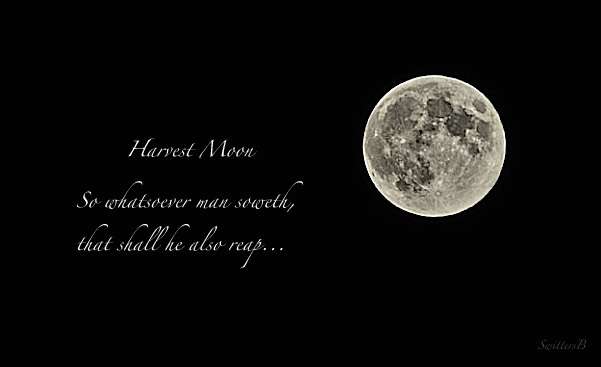 Harvest Moon-Super Moon-nature-life-man-SwittersB-photography