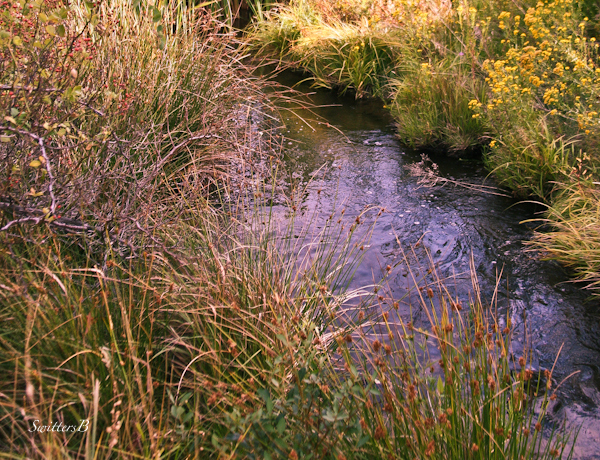 headwaters-small stream-photography-Oregon-SwittersB