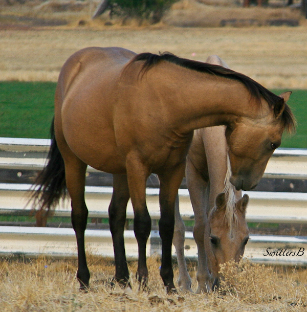 horses-photography-SwittesB-ranch-pasture-animals