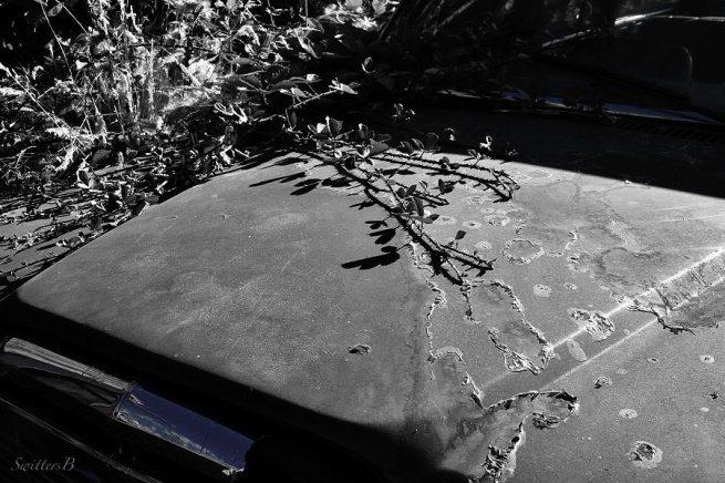 old car-briar-abandoned-photography-SwittersB-B&W