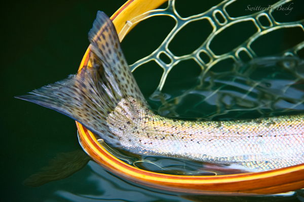 trout-tail-net-photography-fly fishing-photography-SwittersB