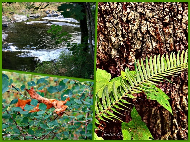 woods-fern-leaf-river-Oregon-Salmon River-SwittersB