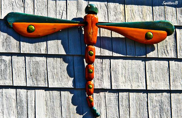 art-wood-dragon fly-Siletz-Oregon-Coast-photography-Switters