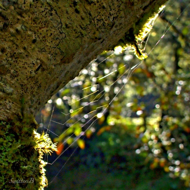 dream catcher-web-tree trunk-Oregon-moss-photography-SwittersB