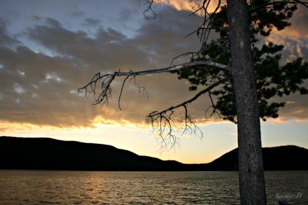 east lake-Oregon-lake-photography-SwittersB-tree branches