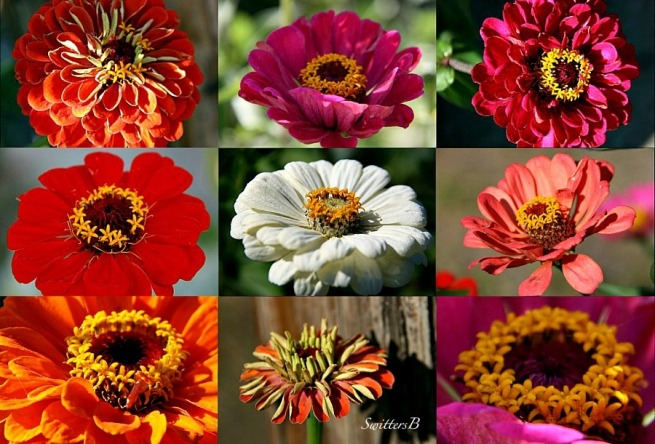 Fall flowers-collage-macro-photography-SwittersB