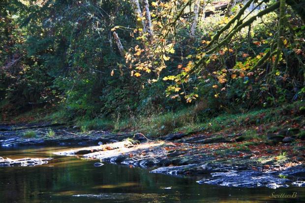 Fall-Oregon-River-SwittersB