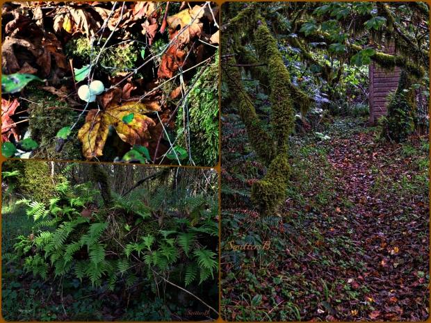 Fall-Oregon-Woods-SwittersB