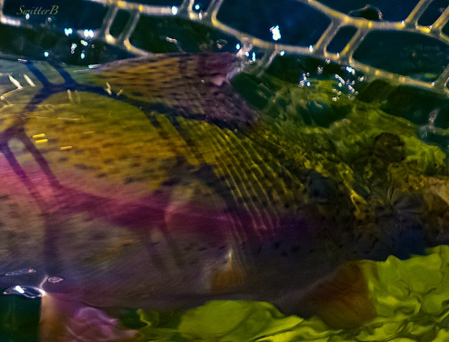 fish-net-underwater-shadows-SwittersB-Pentax Optio