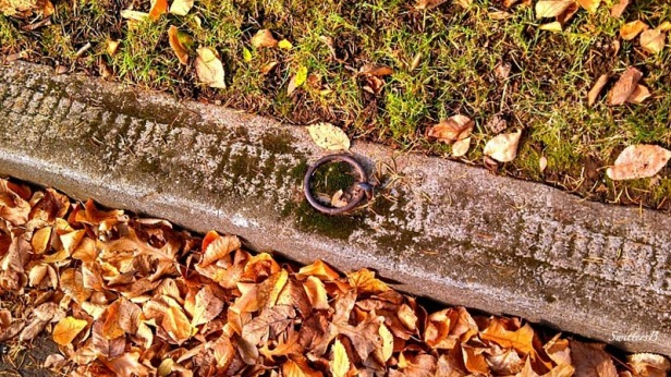 Horse Ring-Curb-Leaves-Portland-SwittersB-Photography