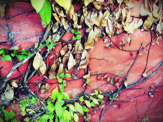 red wall-growth-death-new-old-photography-SwittersB
