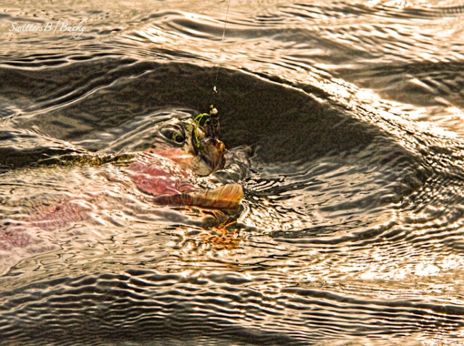 ripples-water-waves-trout-fish on-SwittersB-photography