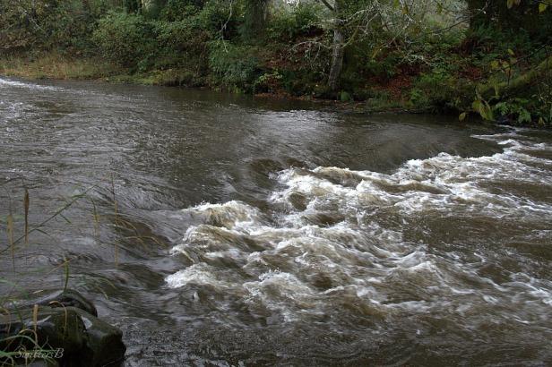 River lower shelf 2-SwittersB