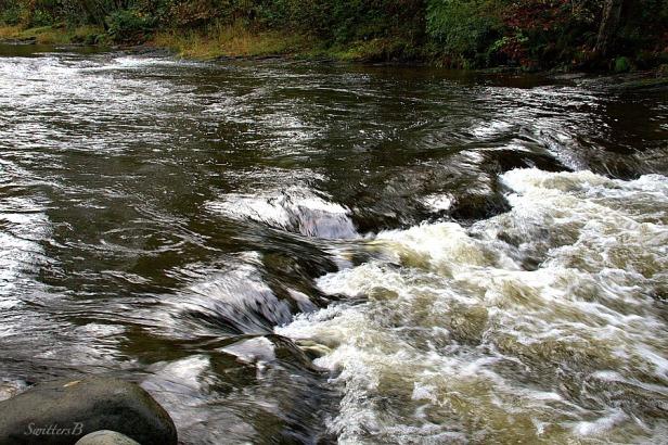 River lower shelf 4-SwittersB
