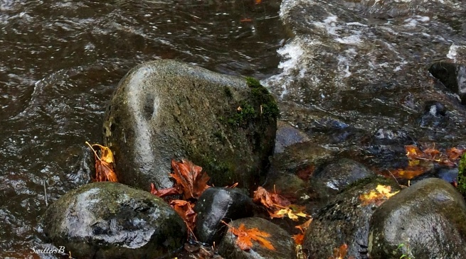 river rock-slippery-river-Oregon-photography-SwittersB