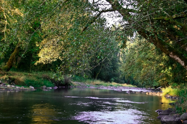 stream-Fall-water-trees-Oregon-SwittersB-photography
