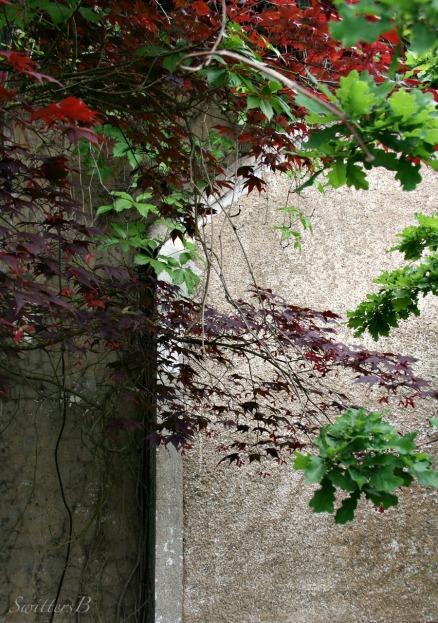 Behind+SwittersB+Phogography-Rustic Wall-Vines