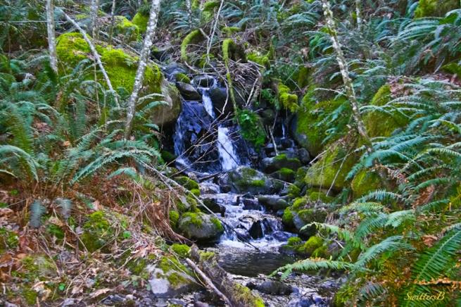brook+small stream-Cascades-Oregon-SwittersB-photography