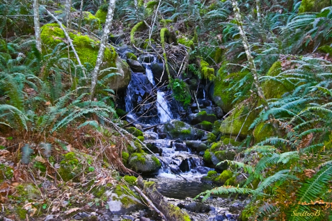 brook+small stream-Cascades-Oregon-SwittersB-photography