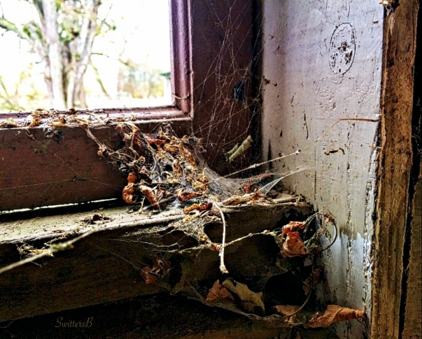 cobwebs-window-leaves-the shed-rural-photography-SwittesB