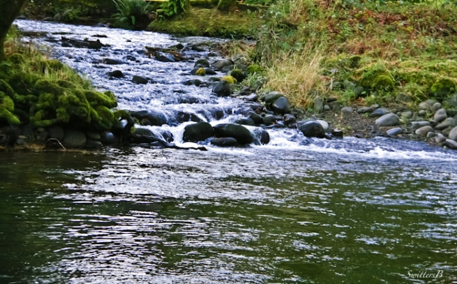 creek+river-Oregon-water-photography-SwittersB