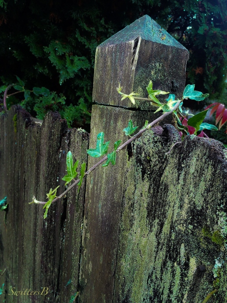 fence-Oregon-cedar fence-post-decay-photography-SwittersB
