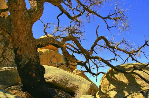 Gnarly branch-Mojave-Rocks-Outdoors-Photography-SwittersB