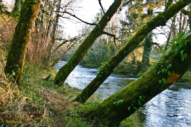 leaning towards-trees-river-Oregon-photography-SwittersB