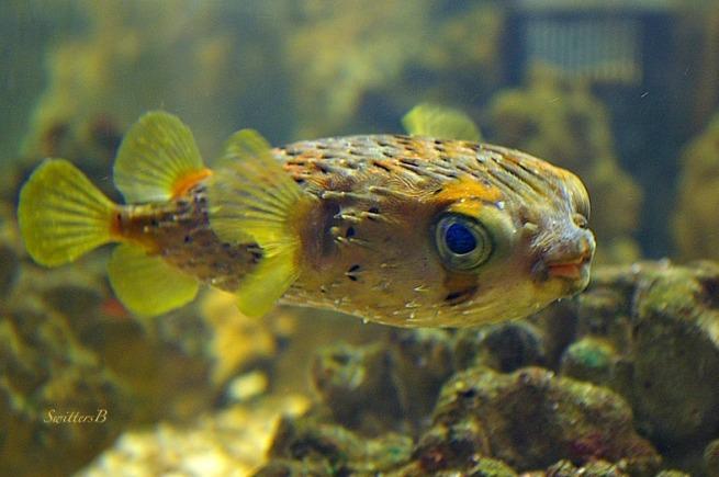 Little Fish-Inquisitive-Mexico-Bahia Aqua Verde-fish-SwittersB