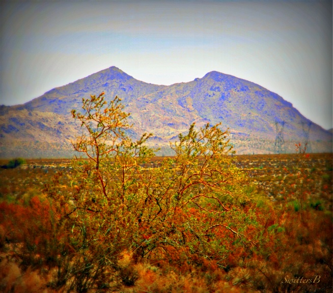 mountain+bite+desert-mojave-SwittersB-nature-photography