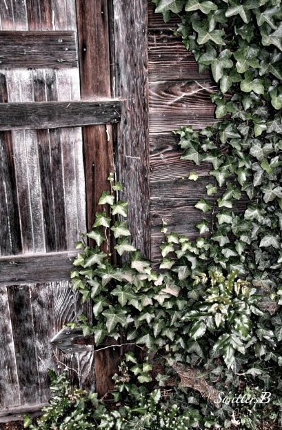 old door-ivy-overgrown-SwittersB-photography