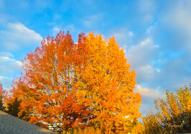 orange leaves+Fall-Oregon-photography-color-SwittersB