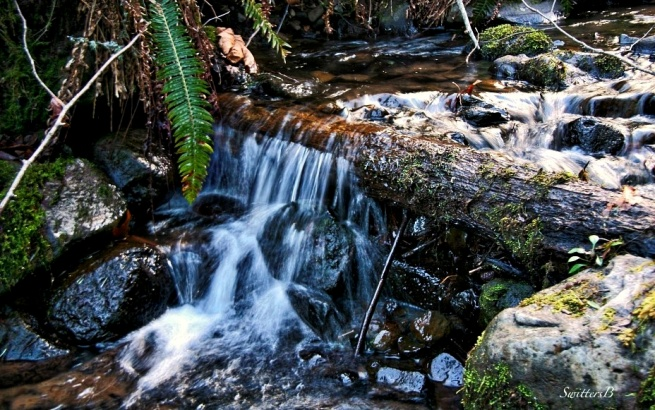 small stream+mountains-moss-fern-photography-SwittersB
