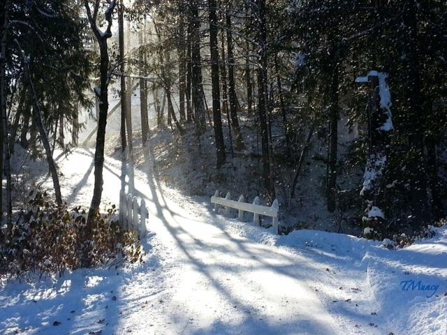 snow+Oregon-woods-bridge-photography-TMuncy-SwittersB