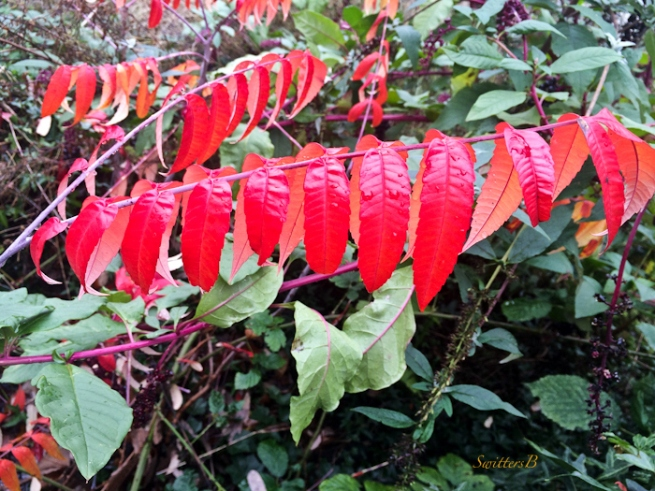 vivid red-plants-Fall-photography-Oregon-SwittersB