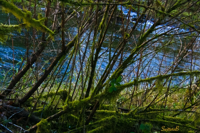 branches-bushes-river-Oregon-SwittersB-photography