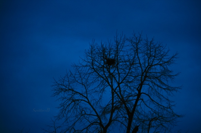 darkness+tree-old nest-sky-Winter-SwittersB