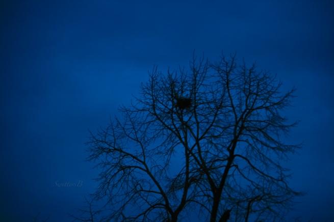 darkness+tree-old nest-sky-Winter-SwittersB