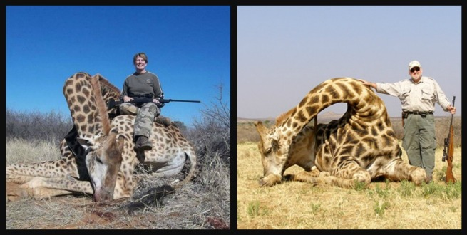 Giraffe Hunting
