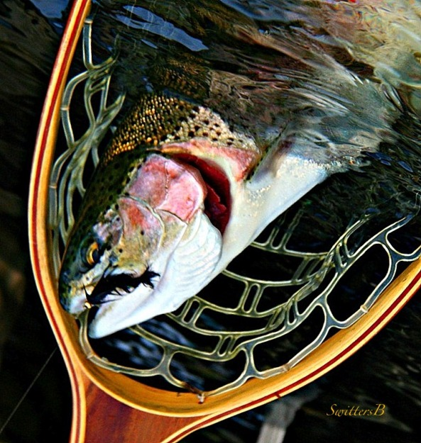 half in the bag-net-fly fishing-trout-SwittersB
