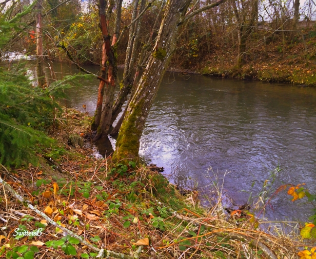 Johnson Creek+Portland-Oregon-photography-Switters