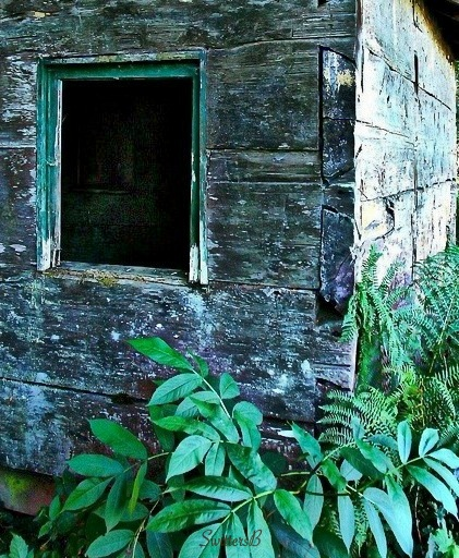 old cabin+Oregon-planks-interlocked-photography-SwittersB