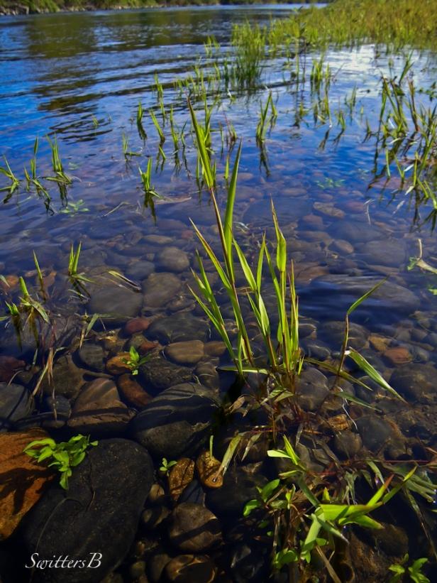 river+rocks-grass-McKenzie R.-Oregon-SwittersB