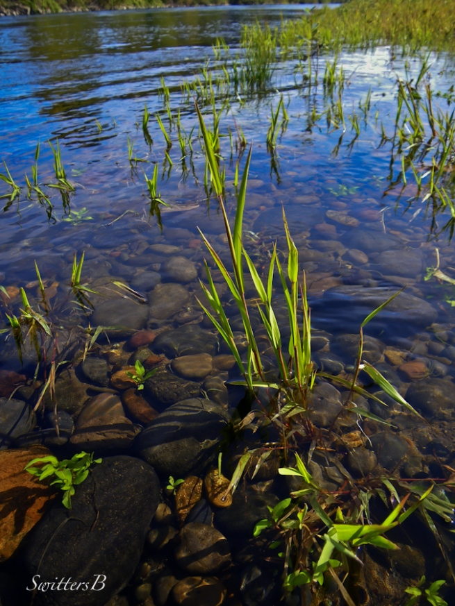 river+rocks-grass-McKenzie R.-Oregon-SwittersB