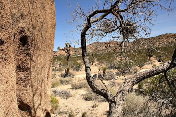 rock wall-curved branch-mojave-desert-SwittersB-photography