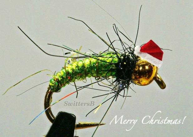 santa bug-pupa-macro-photography-SwittersB